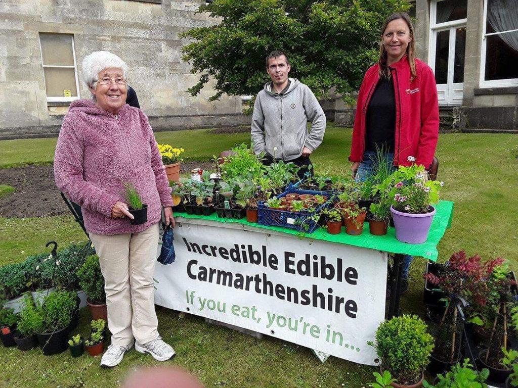 Incredible Edible Carmarthenshire holding a plant sale.