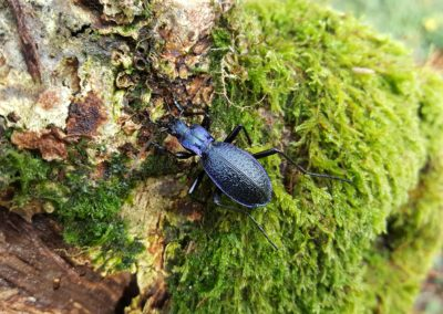 Meet the rare species hiding in Skewen